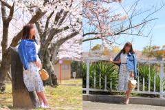 桜満開!お花見デート